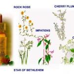 Resque Remedy – капките за спешна помощ