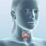 Когато щитовидната ни жлеза говори…