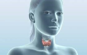 Когато щитовидната ни жлеза говори...