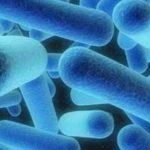 Kожните заболявания и дисбактериозата