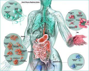 Бебешки микробиом