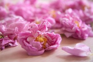 Rose (намери извора на своята вътрешна красота)